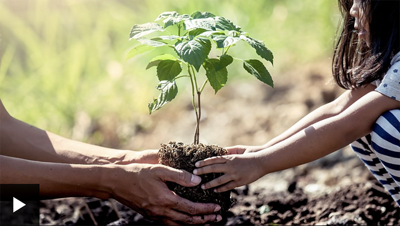What if everyone in the world planted a tree?