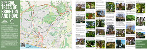 Special Trees of Brighton and Hove
